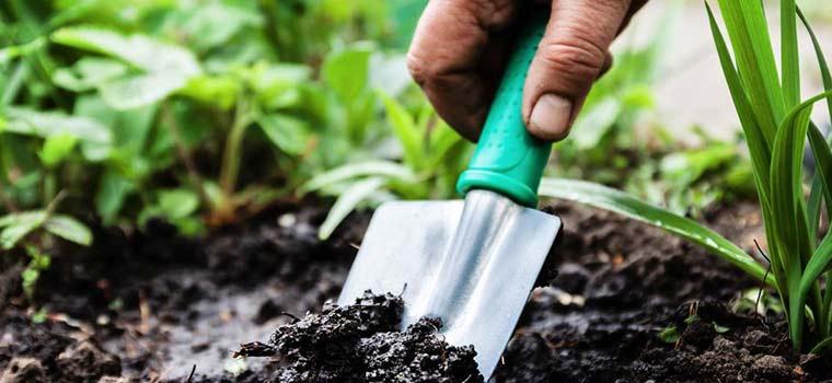 Panama Profit jardines